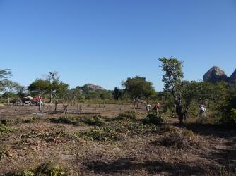 Limpeza do Terreno